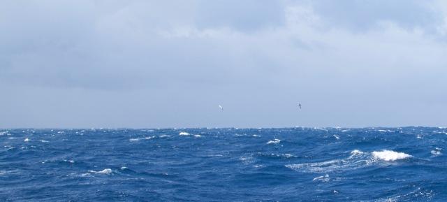 choppy_blue_ocean